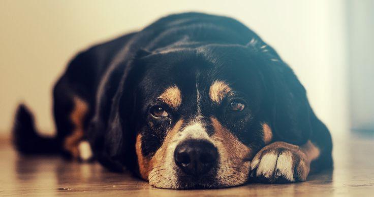 Anaalklieren van je hond herkennen, behandelen en voorkomen