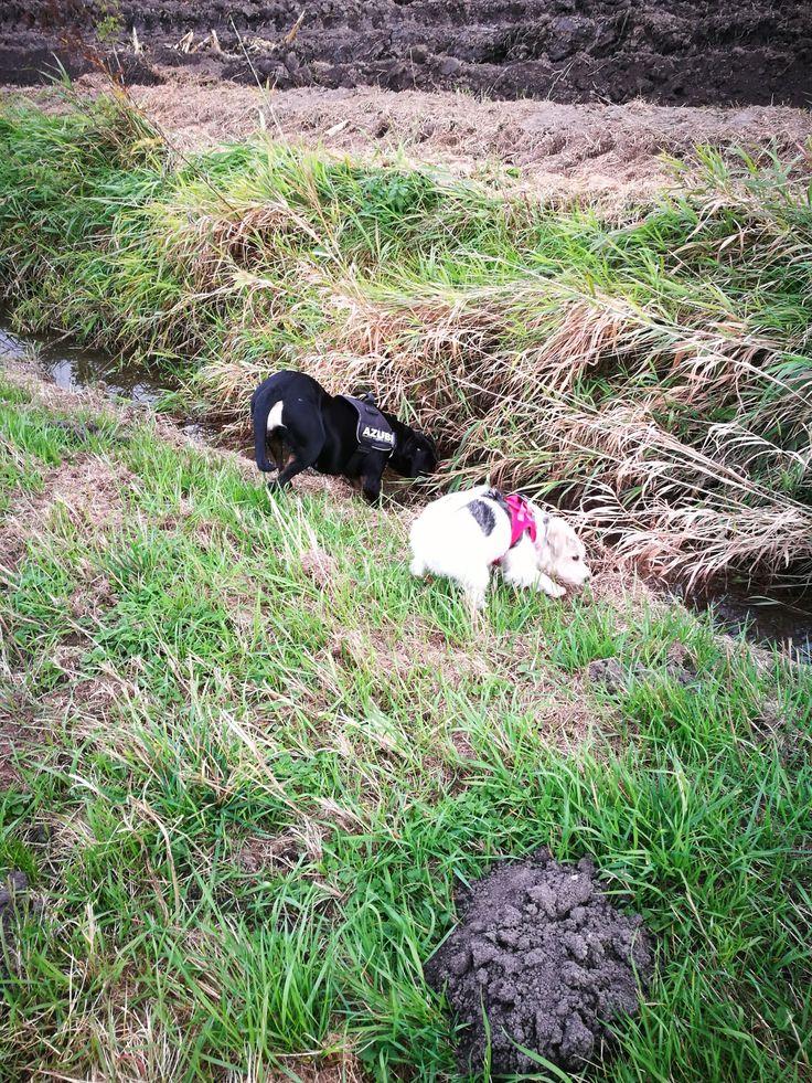 Miro und Freundin auf der Suche nach der Maus