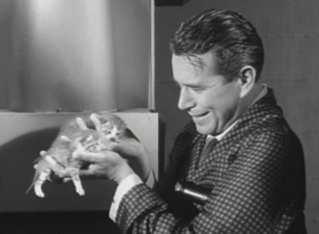 "Bentley Gregg (John Forsythe) holds up a couple of the newborn kittens in the Bachelor Father episode ""The Richest Cat"" (1962)."
