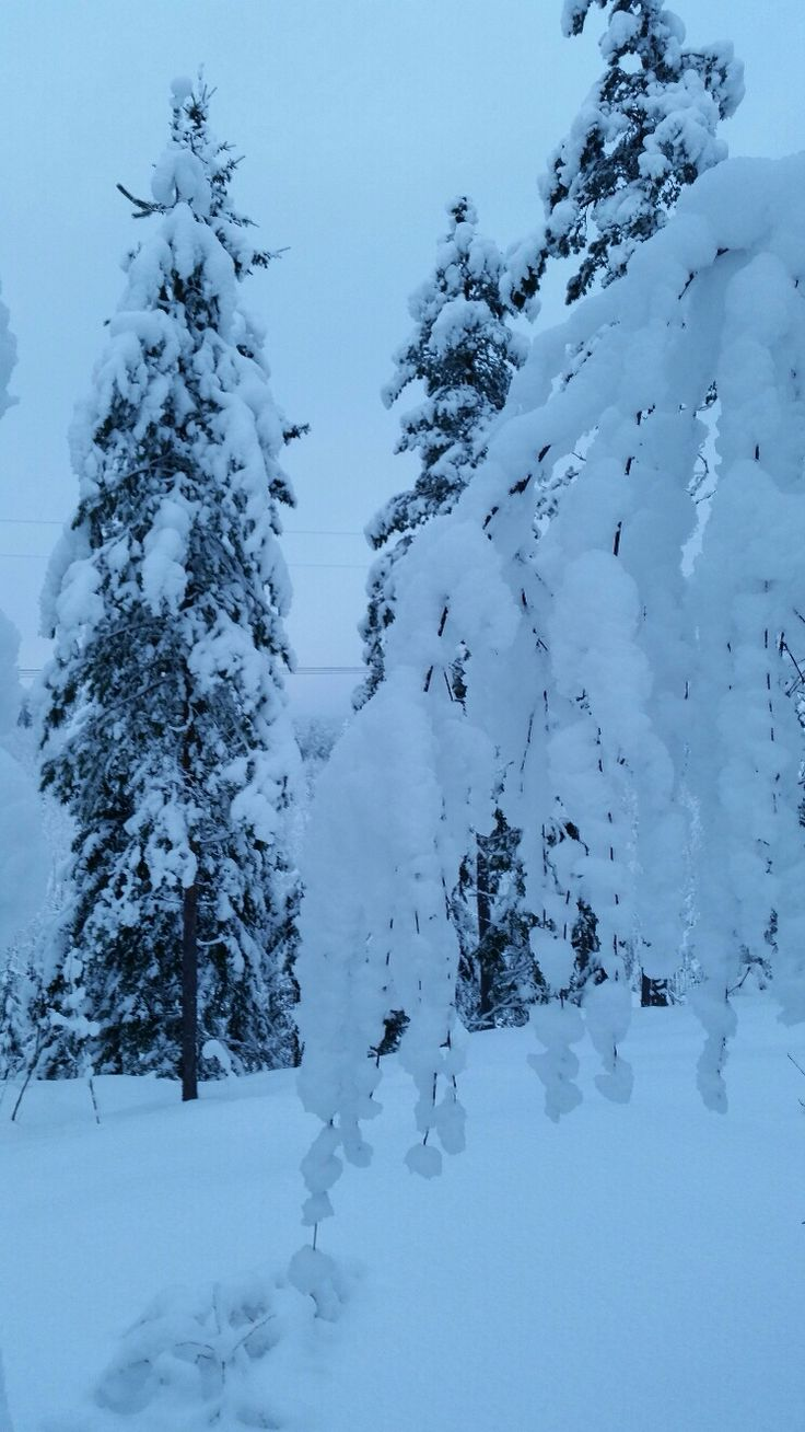 Feb 5th 2015 Uudenkylän harju, south eastern Finland - view from skiing track.