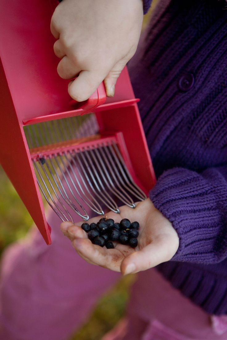 Inspire the youth by taking them out on a blueberry hunt. | Nordic Choice #localeataward
