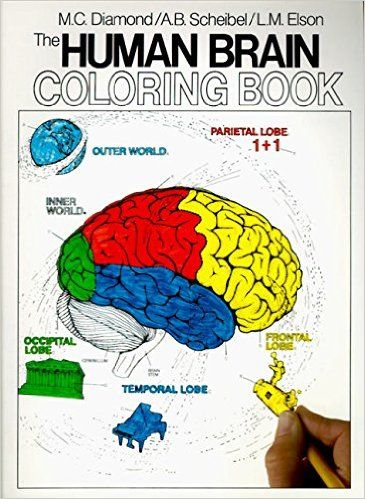 The Human Brain Coloring Book Concepts Series Developed By Internationally Renowned Neurosurgeons This Unique Is Designed For Students Of