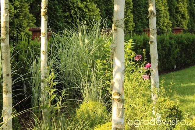 Ogród Sylwii od początku cz.II - strona 1155 - Forum ogrodnicze - Ogrodowisko