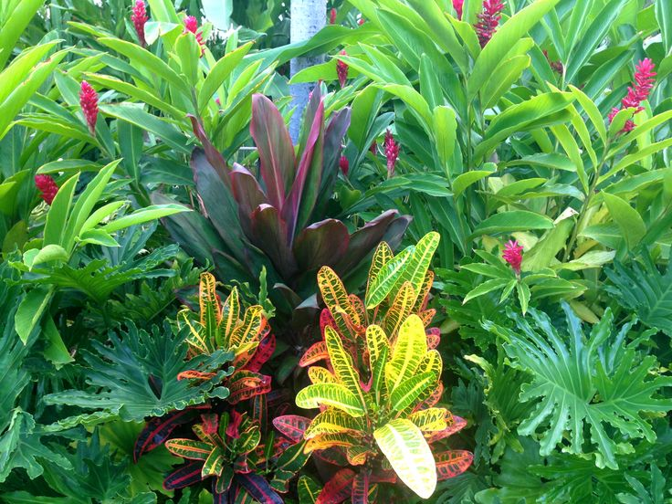 tropical garden inspiration: dwarf red ginger, cordyline (ti plant), crotons - from Fairmont Wailea, Maui Hawaii - Good Gardening