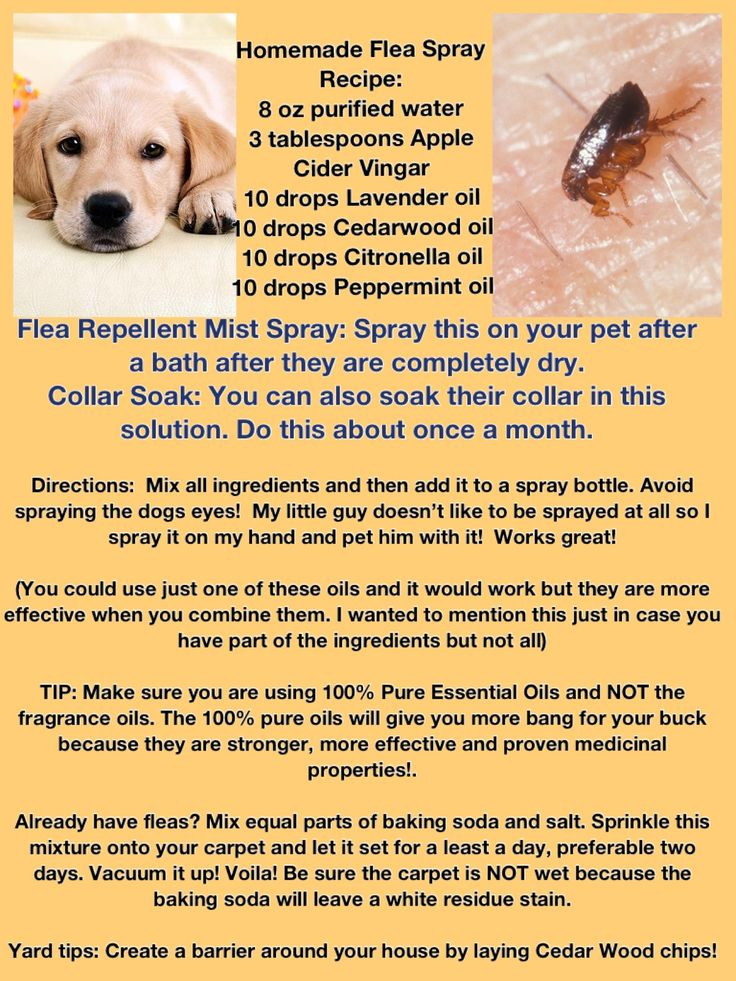 Best Repellant Flea And Tick Treatments For Dogs