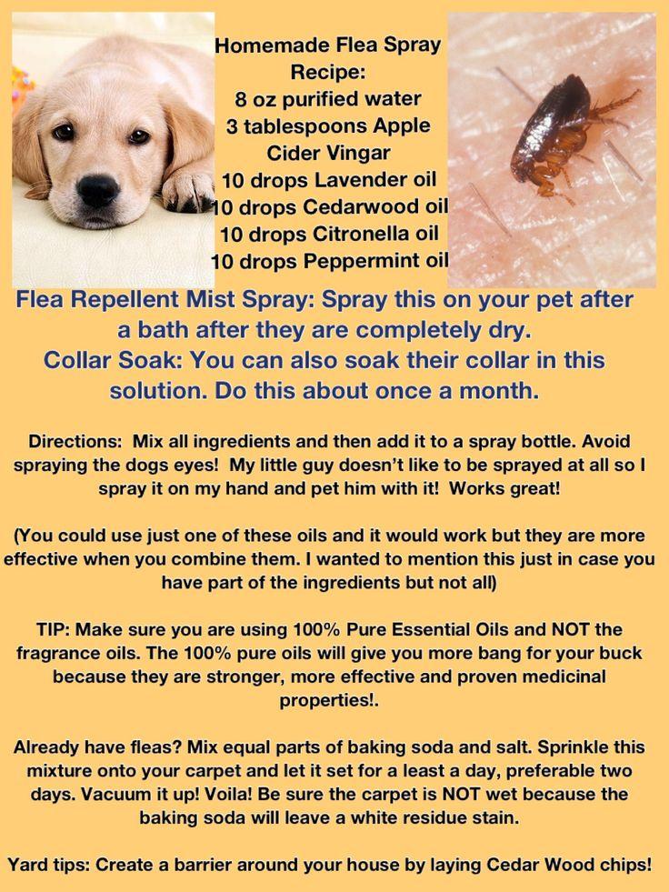 25 Best Ideas About Flea Repellant On Pinterest Natural
