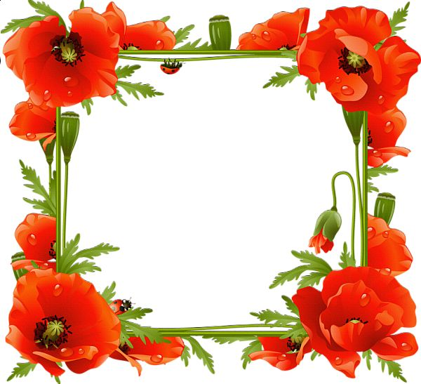 Poppies Transparent Frame