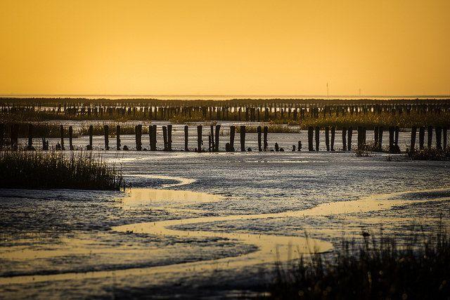 Sonnenuntergang im Schlick vor Friedrichskoog. - Wattenmeer, Nordsee