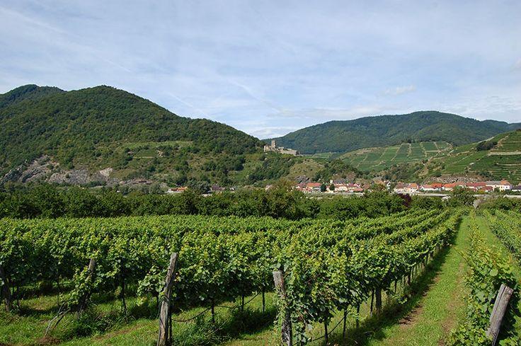 Vindistriktene i Wachau regionen er like populært blant syklister som vinkjennere. Foto: Arnold Weisz ©