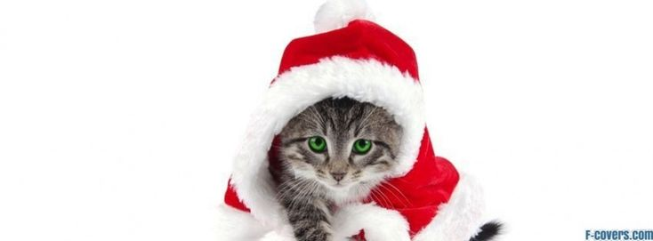 santa hat cat facebook cover