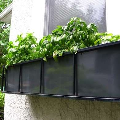 Growing Basil Fly Repellant Basil is a natural fly repellant. Grow it in pots on windowsills and in doorways to deter flies during the warmer months. √√√