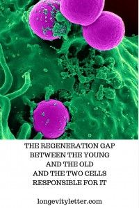 Read it on http://longevityletter.com/the-regeneration-gap-between-the-young-and-the-old-and-the-two-cell-types-responsible-for-it/