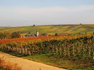 Wine fields in autumn,Rhineland-Palatinate,Germany - Ursula Sander/Getty Images