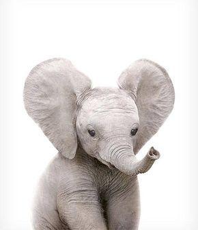 Safari nursery art, Elephant print, PRINTABLE art, Safari animals wall art, Baby elephant, Safari theme, Nursery wall art, Safari baby room – Gombert Anne