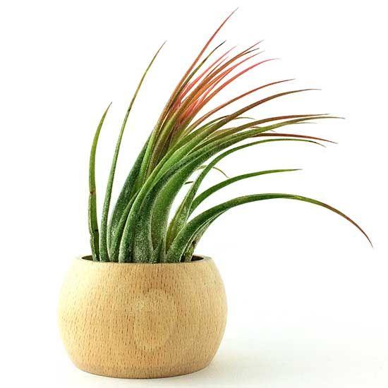 suport lemn natur plante aeriene