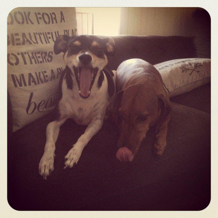 #100happydays it's a dogs life