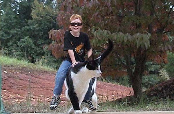 Resim Bul   Köpek   Dünyanın En Büyük Köpek Resimleri