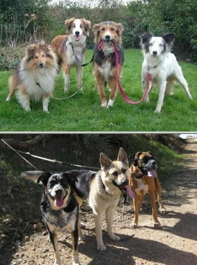 Nicole Rivas offers one of the best dog walker services. She is also known to do great pet care and dog sitting services. Check out her positive dog walker reviews and dog walking prices today.