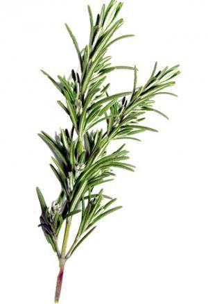 """Benefícios do Alecrim - Alecrim é uma erva mediterrâneo com folhas em forma de agulha e rosa, flores azuis ou roxas. A palavra """"alecrim"""" vem das palavras latinas ros (que significa """"orvalho"""") e marinus (que significa """"mar""""). O Alecrim é usada em muitos pratos culinários e é bem usado para condimentar sopas, molhos e carnes. Além de ser usado para cozinhar, também tem sido utilizado como um remédio natural para uma variedade de doenças ao longo dos séculos."""