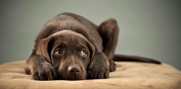 A kutya rázza?  Megértjük az okokat
