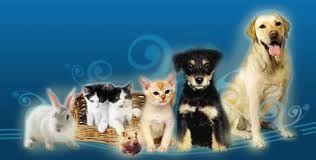 Buscar perro y gatos graciosos para mascotas de compañia pinterest - Cerca amb Google
