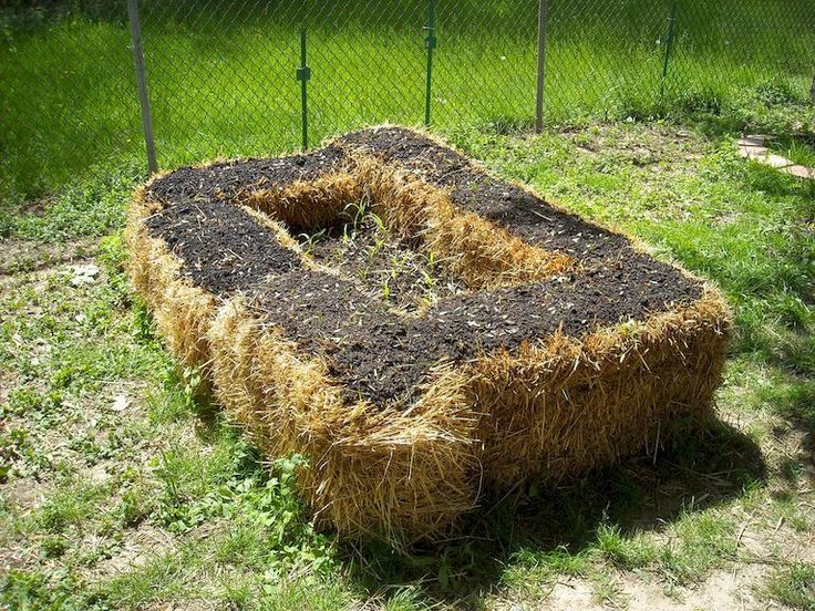 102 best images about my garden on pinterest gardens garden fountains and grow your own for Best plants for straw bale gardening