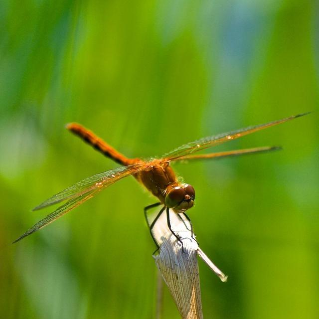 Dragonfly by James Inglis, via FlickrJames Of Arci, James Ing