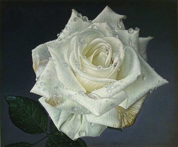 Delicate-hyper-realistic-paintings-of-roses-by-Gioacchino-Passini-05.jpg (740×615)