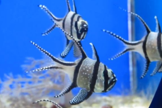 260 best fish aquariums images on pinterest fish for Best saltwater fish for beginners
