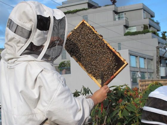 Inspecting VPD bees - Hives for Humanity