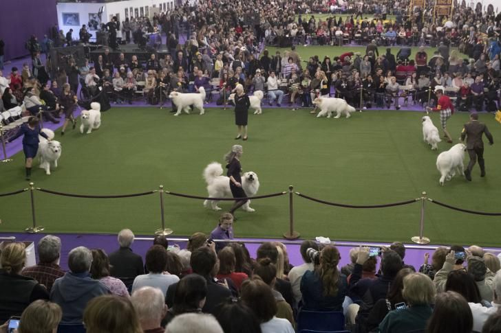 Pyrs at Westminster 2017