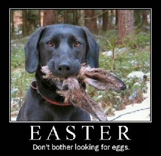 Funny Easter 2016 Photos, Pictures, Images 326X316