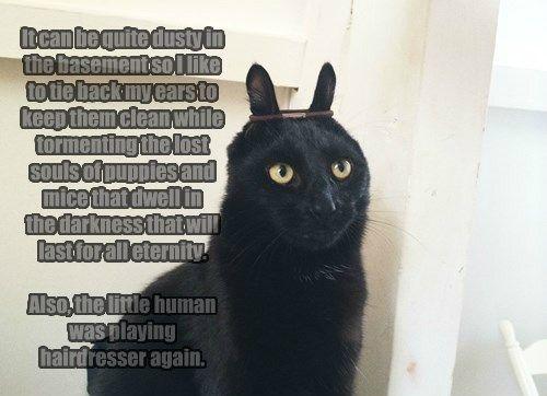 Basement Cat's True Nemesis Is The Little Human