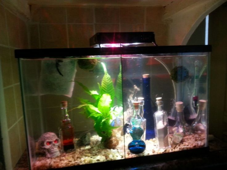 Divided betta tank tanks pinterest betta tanks and for Divided fish tank