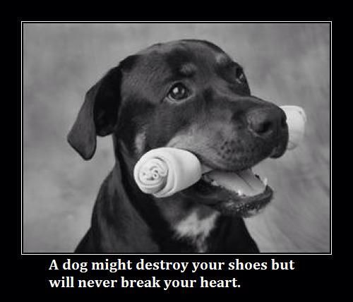 Dogs will never break your heart | Cute dog quotes, Cute ...