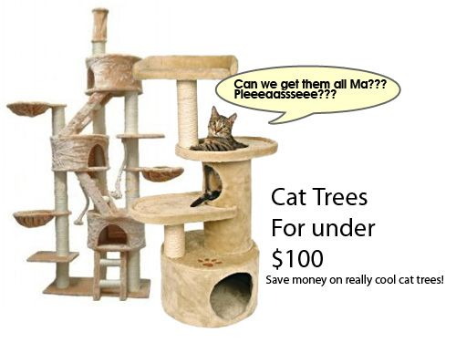 best 25 homemade cat beds ideas on pinterest homemade cat toys cat houses and cat beds. Black Bedroom Furniture Sets. Home Design Ideas