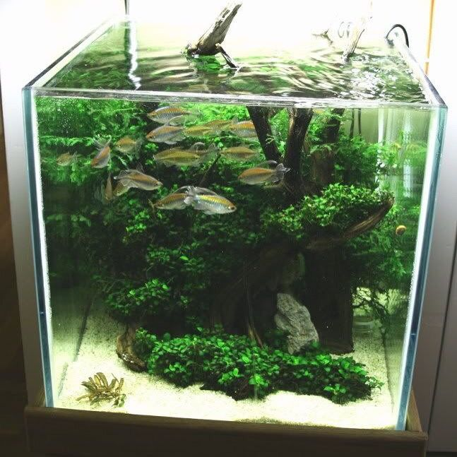 Inspiration aquascape pinterest inspiration for Decoration zen aquarium
