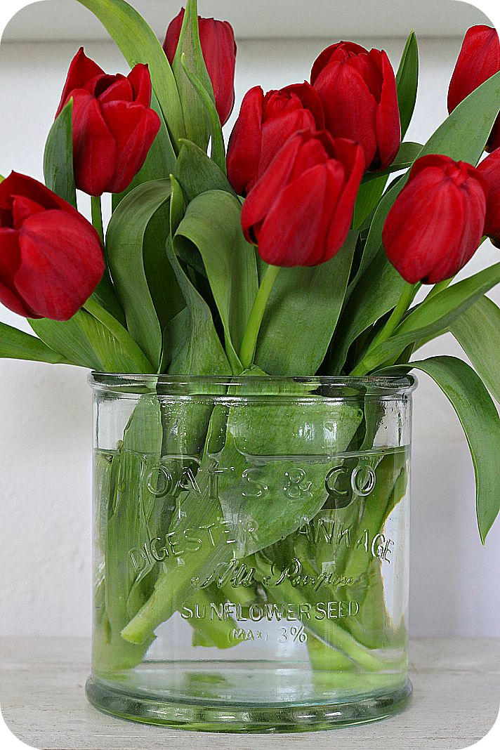 flowers.quenalbertini: Red tulips, Lilla Blanka