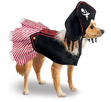 OMG OMG this is too cute Dog pirate costume - Arr ye ready for Howloween? #petcohowloween