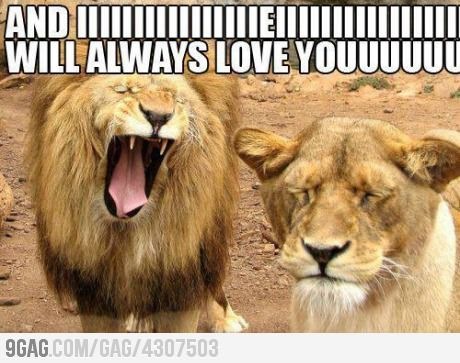 i will always love u: Lion, Animals, Giggle, Funny Stuff, Humor, Funnies, Funny Animal, Things