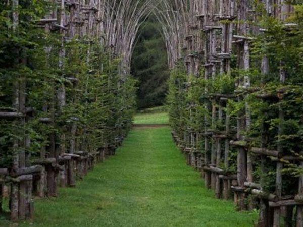 Органическая церковь, Италия. Это удивительное строение находится на окраине города Бергамо, у подножия гор Монте-Арена. Собор является органическим, так как создан, по сути, из деревьев.