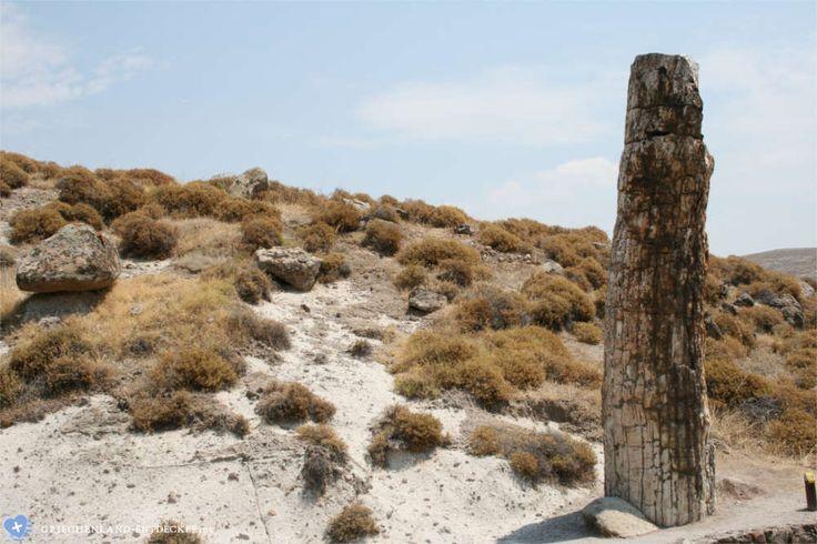 Der versteinerte Wald ist eine der interessantesten Sehenswürdigkeiten der griechischen Insel Lesbos