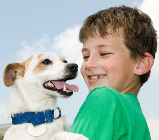 Chemical Flea Collars Threaten Pets and Kids, as well as Pests