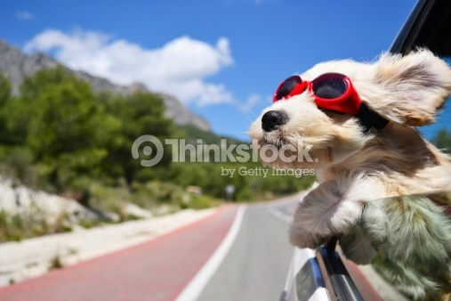 Holiday Dog Stock Photo 466240817