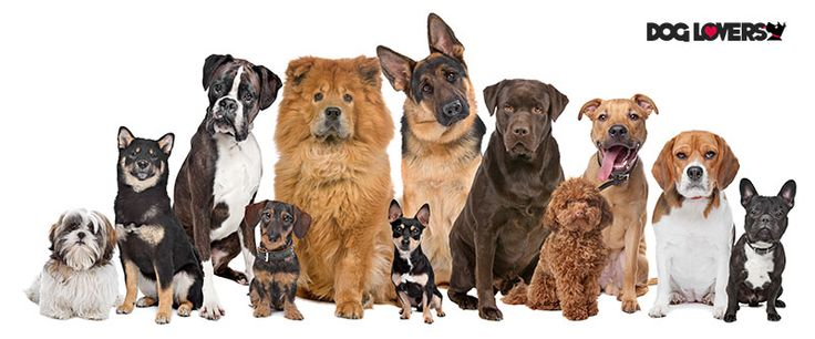 112 Interesting facts about dogs. Dog facts. Fun facts and information about dogs. Facts about dog breeds. http://dog-lovers.co.uk/1048/dog-facts-and-information-about-dogs/