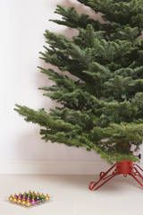 Keep your tree alive by using a tree preservative. This is the same recipe my mother has used since the 1970s!