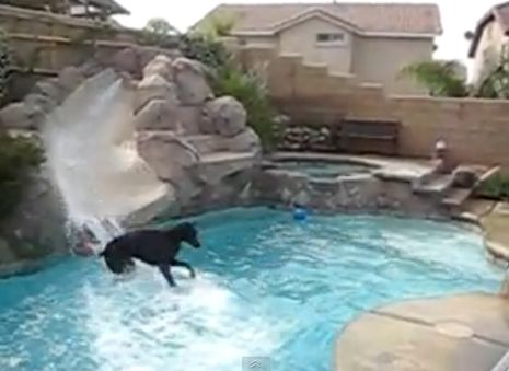 Playful Doberman loves to slide into pool (VIDEO) » DogHeirs | Where Dogs Are Family « Keywords: Doberman Pincher, slide, pool, cute video