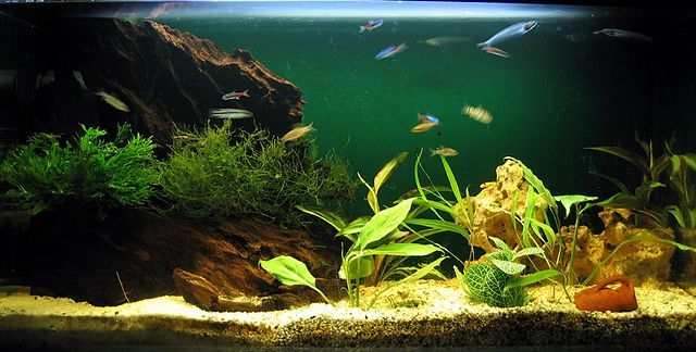 """How To Take Care Of Freshwater Aquarium… The Right Way…How to really care for your aquarium? As most of us who own home aquarium know that we have to do a routine maintenance but… Is there something else that we should be aware of? The absolute answer is yes there are much more than the word """"maintenance"""" or what does complete maintenance involve in keeping your aquarium in a top shape...(continue reading please click an above link)"""