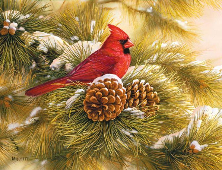 December Dawn Cardinal Christmas Cards #Christmas #Nature