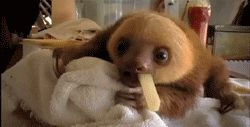Small sloth eating a large fry